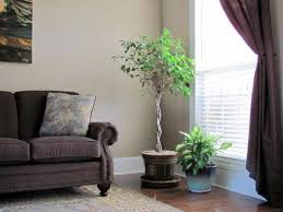 living chic and unique wall decor for trends home plants room