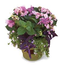 container gardening with endless summer hydrangeas