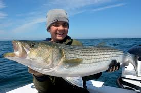 cape cod striped bass fishing charters with reel deal fishing charters