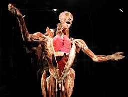 A Picture Of The Human Anatomy Photos Body Worlds Vital Opens At Faneuil Hall Marketplace In Boston