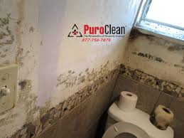 Mold Growing In Bathroom Post Construction Mold Is A Growing Problem