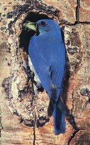 508 best there u0027s a blue bird on my shoulder images on pinterest