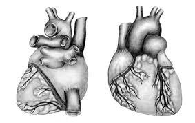 medical illustration aventis pharmaceuticals on behance