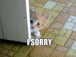 I Am Sorry Meme - ideal i am sorry meme i 39 m sorry cat meme memes kayak wallpaper