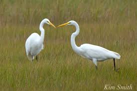 birds of new england kim smith designs