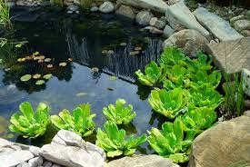 37 backyard pond ideas u0026 designs pictures