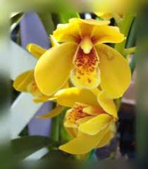 orchid flowers greeting cards