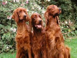 pets3000 com exceed dog food
