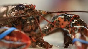 cuisiner un homard vivant et si ricardo avait tort ici radio canada ca