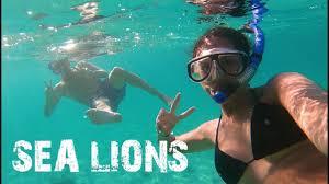 Nevada Snorkeling images Incredible snorkeling with sea lions in la paz baja california jpg