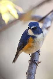 Small Beautiful Pics 3791 Best Small Flowers And Little Birds Images On Pinterest