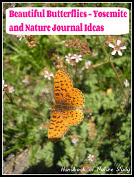 beautiful butterflies and some nature journal ideas