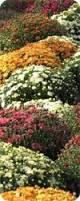 Grass Roots Landscaping by Grass Roots Landscaping Inc Of Harrisonburg