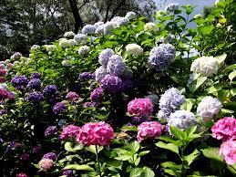 beautiful flower garden decorating clear