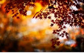 fall backgrounds google autumn leaves 3d lwp android apps on