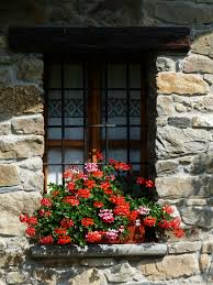 Wall Plant Holders Free Images Rock Flower Window Wall Orange Red Cottage