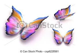 colorful butterfly white clipart search illustration