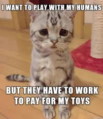 Cat Problems Meme - 30 first world cat problems that will make your day