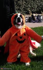 Saints Costumes Halloween St Bernard Pumpkin Costume Ideas Dogs