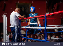 2 female boxer dogs together female boxers stock photos u0026 female boxers stock images alamy