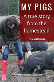 224 best raising pigs images on pinterest dogs gardening and garlic