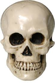 halloween background skulls scary halloween skull png image