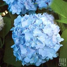 light blue flowers pink and blue flowers light purple and pink wedding flowers bush