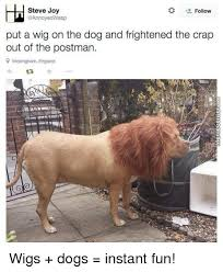 Annoyed Dog Meme - steve joy follow asp put a wig on the dog and frightened the crap