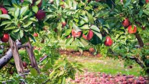 Planting Fruit Trees In Backyard Planning And Planting The Perfect Backyard Orchard Stuff Co Nz