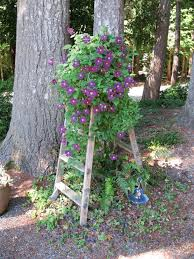 bought this old stepladder at a resale shop for 5 00 clematis