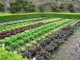 Garden Allotment Ideas Vegetable Garden With Formal Edging Grow Eat Pinterest