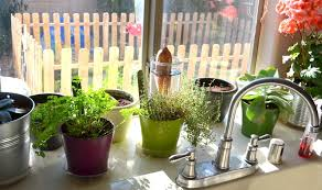Indoor Kitchen Best Kitchen Plants Plants For Kitchen To Decorate It Balcony