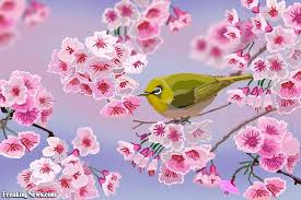 green bird in a cherry blossom tree digital pictures