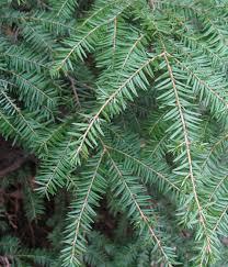 native plants georgia shade tolerant shrubs georgia clanagnew decoration