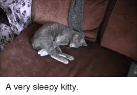 Sleepy Kitty Meme - a very sleepy kitty kitty meme on esmemes com