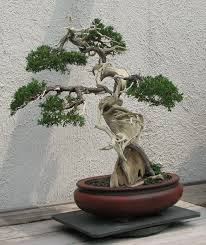 bonsai tree embroidery designs best bonsai 2017