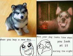 pun husky meme 100 images bad pun dog meme imgflip pun husky