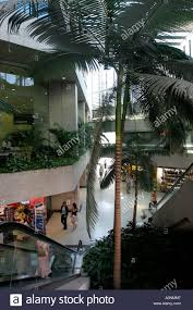 indoor palm a city shopping centre with mature indoor palm trees and other