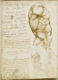 Leonardo Da Vinci Human Anatomy Drawings Michelangelo Anatomy Studies The Torso Pinterest Anatomy