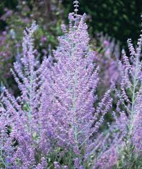 8 plants you u0027ll barely need to water drought tolerant plants