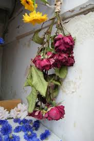 airing 37 best drying flowers images on pinterest drying flowers