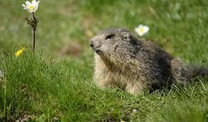 groundhog sees shadow history