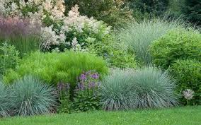 semi circular border with persicaria blue oat grass stachys