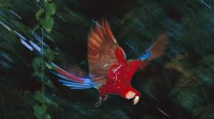 beutiful bird in peru wallpapers and images wallpapers pictures