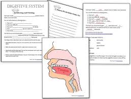 human body system u2013 heart and circulatory system activities