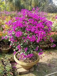 indoor flowering plants winter flowering plants flowering plants