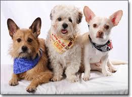 doggone bandanas doggie bandanas fashions canine costumes