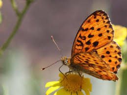 the oldest known butterflies existed before flowers smart