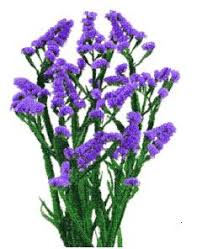 statice flowers san diego wholesale flowers florist bouquets imported purple