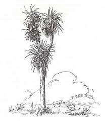 25 best cabbage tree inspired art images on pinterest cabbages